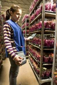 Artikelverwaltung in der Blumengroßhandel / Blumengeschäft Branche