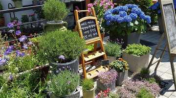 News: Mobiler Fahrverkauf als Service für Blumengeschäfte